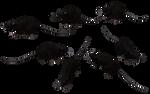 Black Rat Set 05