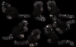 Black Rat Set 07