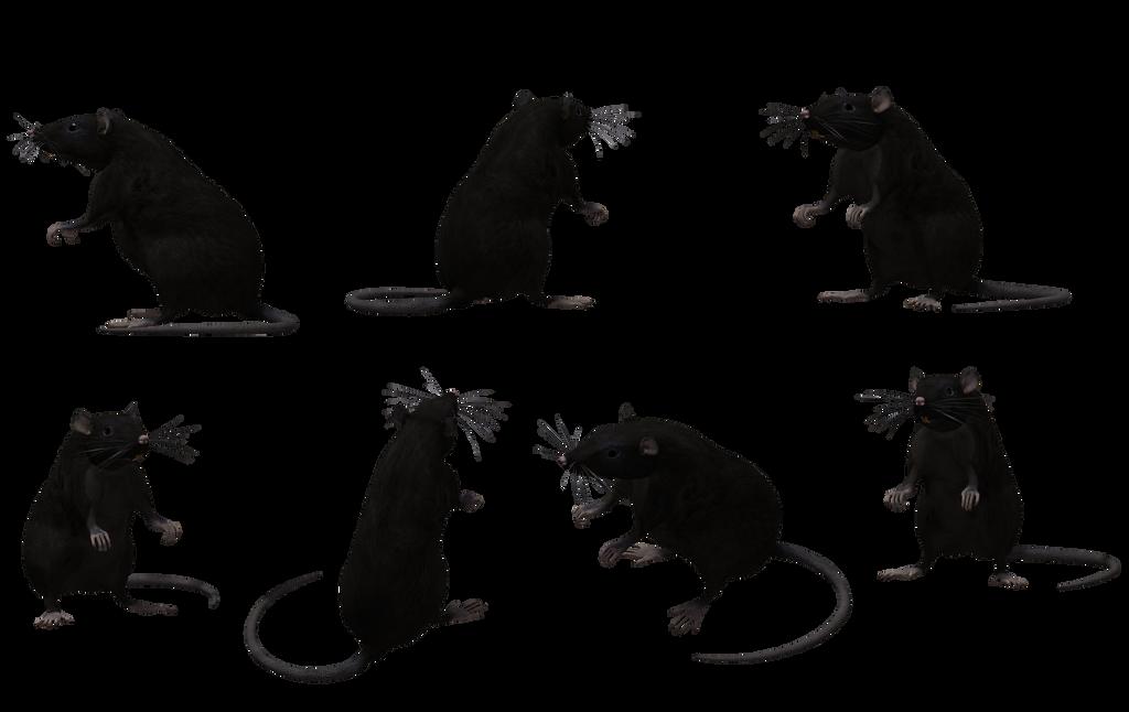 Black Rat Set 08