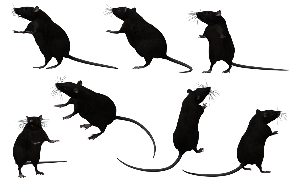 Black Rat Set 09
