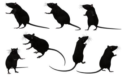 Black Rat Set 09 by Free-Stock-By-Wayne