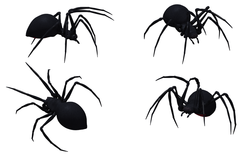 Black Widow Spider Set 06 by Free-Stock-By-Wayne