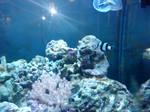 aquarium on dark