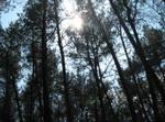 Sun between trees