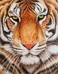 Wild Cat - Pencil Art by SreejaRenganath