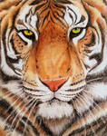 Wild Cat - Pencil Art by SreejaRenganath