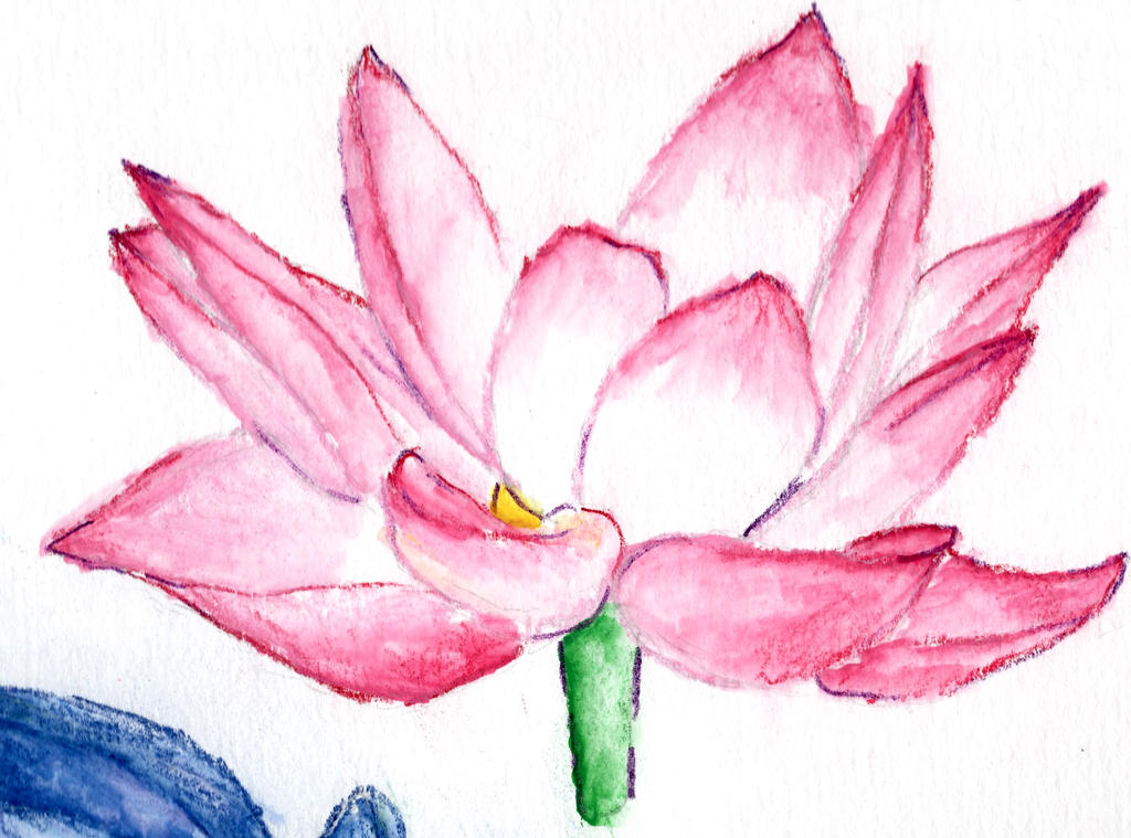 Lotus Flower Water Color By Cynthiaalise On Deviantart
