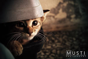 Homeless cat by New-Musti