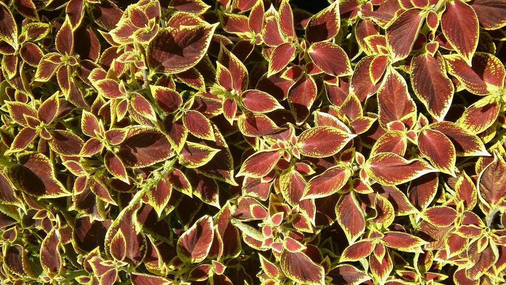 Texture--Leaf patterns by PatternSeeker86