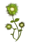 painted flower PNG