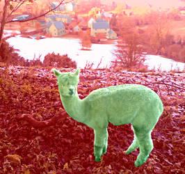 Eve of the Llamas