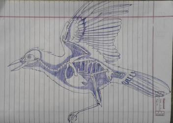 Bird anatomy by Ankit2017