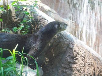 Otter Fall