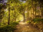 Path through forest STOCK