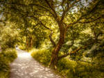 Path by trees STOCK