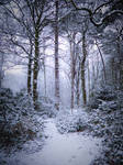 Stock: Winter snow in forest 2