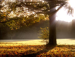 Stock: Sunray tree light by needanewname