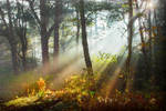 STOCK: Misty Forest light 2