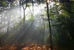 STOCK: Misty Forest light 3
