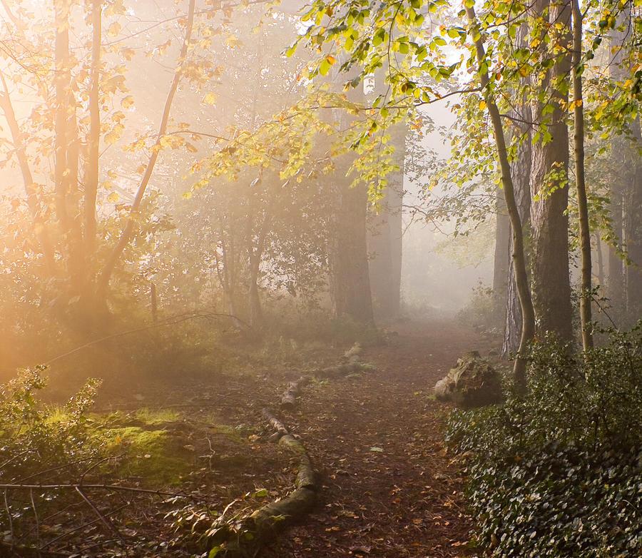 STOCK: Misty Forest light 4