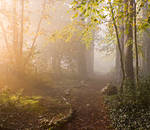 STOCK: Misty Forest light 4