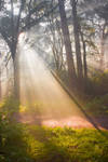 STOCK: Misty Forest light 5