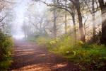STOCK: Misty Forest light 6
