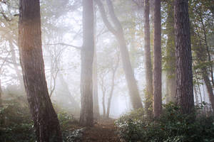 STOCK: Misty Forest light 7 by needanewname