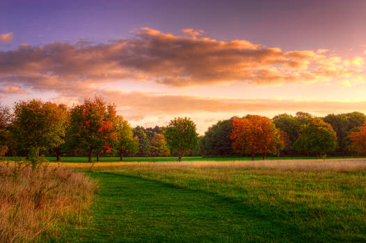 STOCK: Sunrise over a rural field