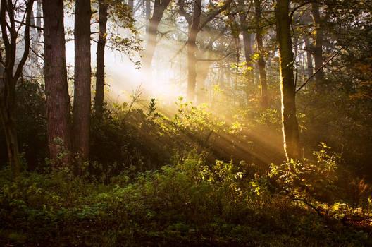 STOCK: Misty Forest light 8