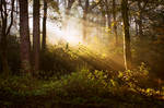 STOCK: Misty Forest light 8