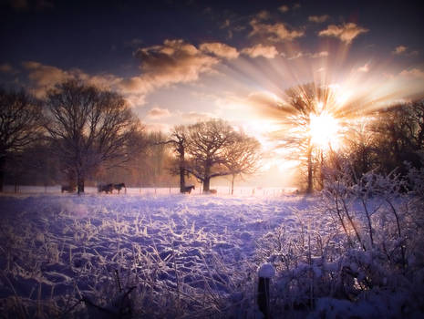 STOCK: Winter sunset scence