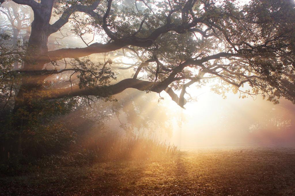 STOCK: Misty forest light 9