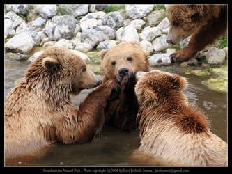 SAP: Brown Bear 1 by elsenator