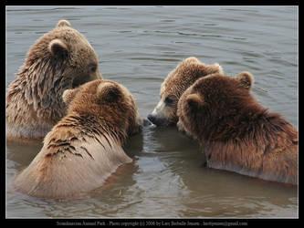 SAP: Brown Bear 3 by elsenator