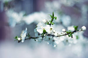 Spring flowers by kwusherARTS