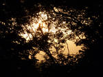 Sunset Through Branches