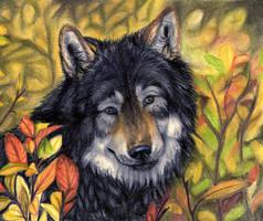 .:autumn Wolf:. by SaidyWolf