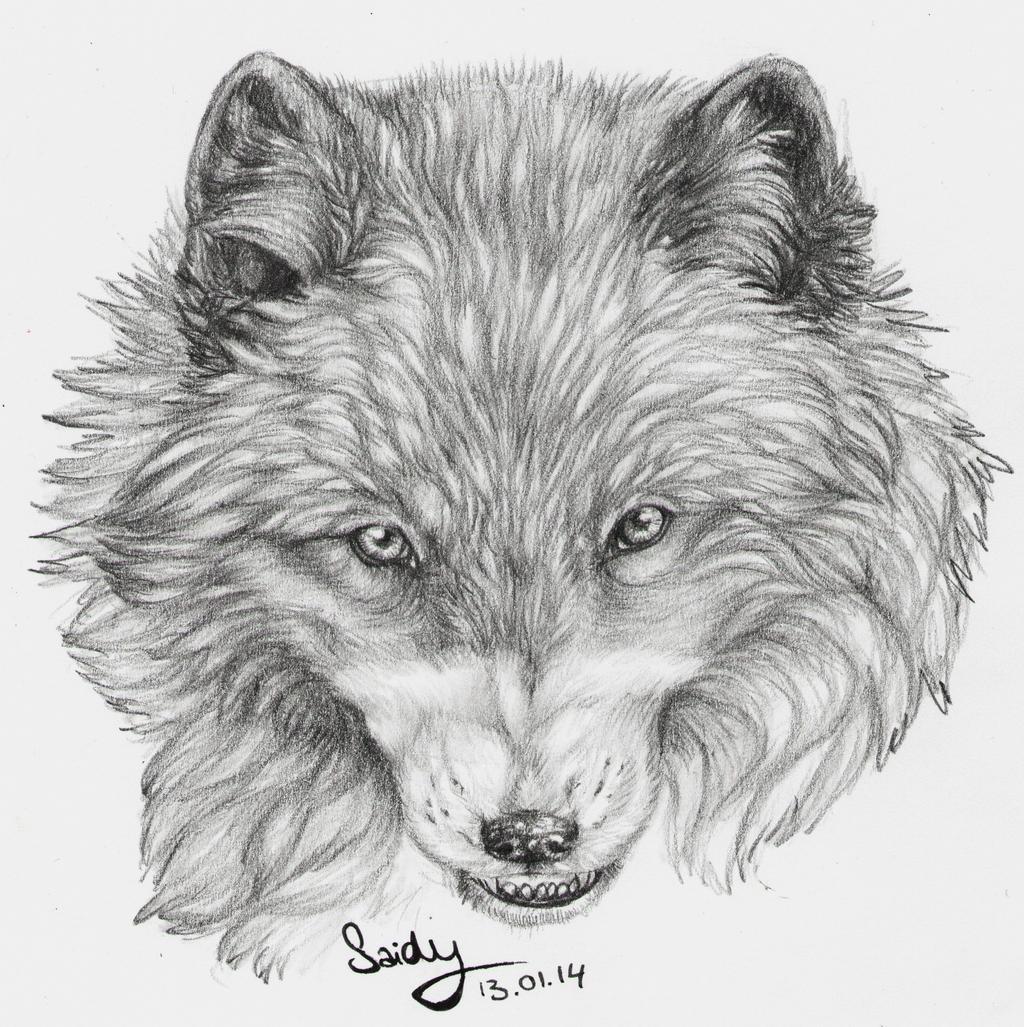 Fox by SaidyWolf