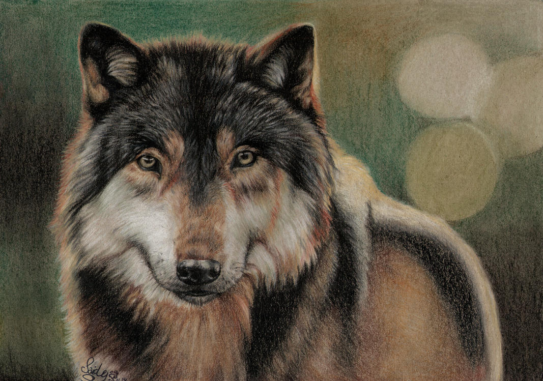 Wolf Portrait by SaidyWolf