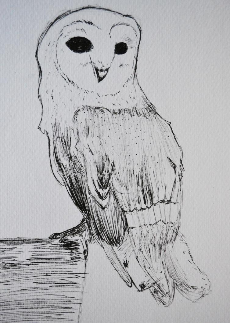 barn owl. by stephhabes