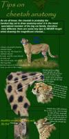 cheetah anatomy tutorial