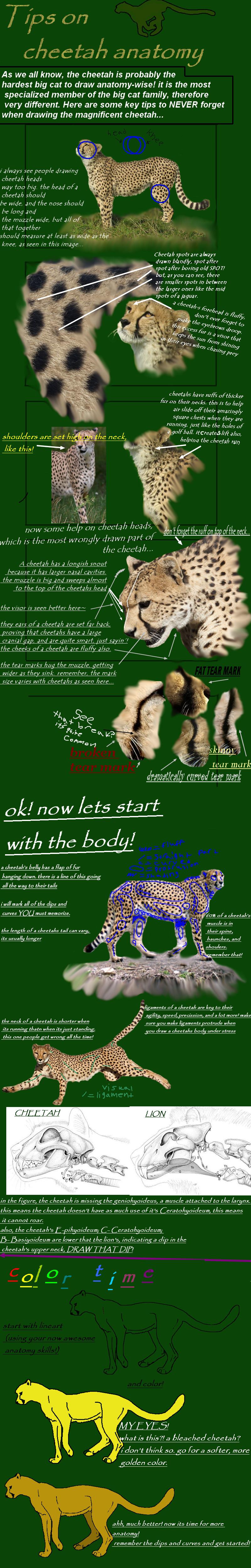 cheetah anatomy tutorial by cheetahsintheearth