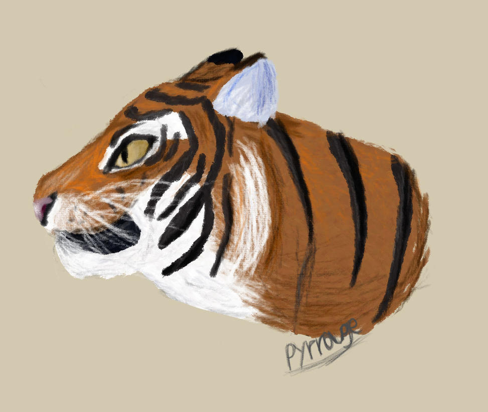 Tiger by Pyrrouge