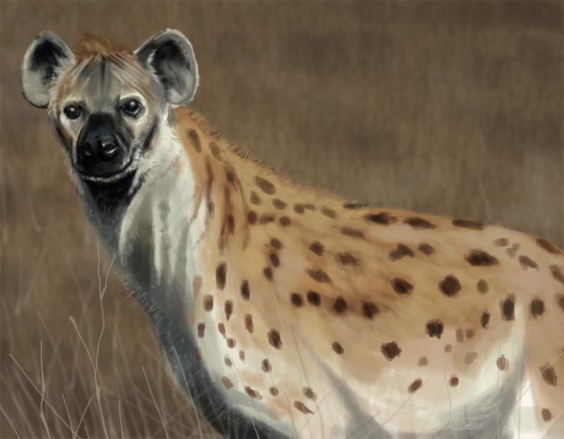 Hyena by KennBaker