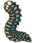 Squrm Ambassador-Wurm