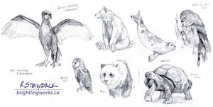 ROM Animal Sketches, August 2014