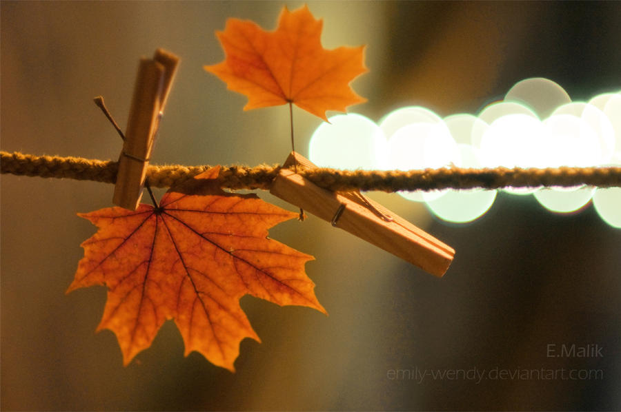 Autumn is still here by Emily-Wendy