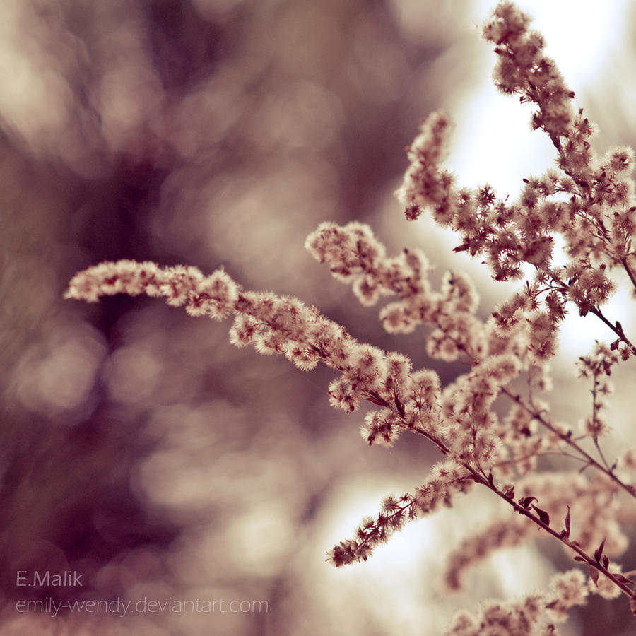 Soft, softer... by ~Emily-Wendy