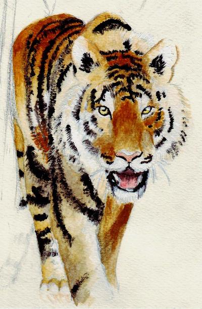 Tiger by venatorfend